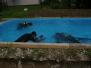 Cvičné potápění