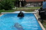 Cvičné potápění v bazénu